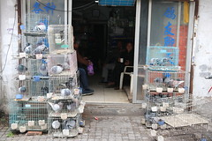 Pigeons for sale in Suzhou, China (mbphillips) Tags: china 中国 중국 中國 asia 亞洲 fareast アジア 아시아 亚洲 苏州 江苏 jiangsu 江南 jiangnan sigma1835mmf18dchsm canon80d mbphillips geotagged photojournalism photojournalist suzhou gusudistrict 姑苏区 姑蘇區