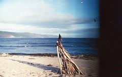 """Bois Flotté"" Québec, Oct 2017 (acelobb) Tags: acelobb analog argentique analogue canon canonft 35mm flickr nature film fujifilm staybrokeshootfilm filmlover pellicule grain wood landart photography"