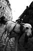 streetdog.... (Claudio Taras) Tags: claudio contrasto controluce bw bokeh biancoenero black bianco monocromo monochrom nikon street shadow streetshot dog portrait people
