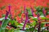 Flower garden (yusuf.rach) Tags: flower nature florist rose morning petal wildlife purple sunflower