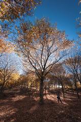 Otoño en Castiñeiras (jojesari) Tags: ar317g 10313 lagodecastiñeiras castiñeiras pontevedra marin jojesari suso otoño autunm explore