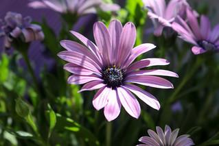 Temps de flors_0083