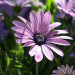 Temps de flors_0083 thumbnail