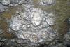Gypsum snowballs (Snowball Dining Room, Mammoth Cave, Kentucky, USA) 20 (James St. John) Tags: gypsum snowball snowballs cleaveland avenue cave passage passages caves mammoth national park kentucky