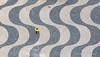 The yellow one and pigeon (ignacy50.pl) Tags: minimal minimalism abstract pattern pavement people birdseyeview bird bricks mosaic lisbon portugal citylife cityview travel reportage
