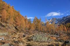 Lötschental (bulbocode909) Tags: valais suisse lötschental montagnes nature automne forêts mélèzes arbres paysages nuages orange bleu rochers
