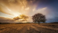 El árbol solitario (Javier Díaz Barrera (javierdiazbarrera.es)) Tags: atardecer 169 árbol tree sunset nubes clouds cielo sky colores colours paisaje landscape otoño autumn javierdb javibichos javierdiaz javierdiazbarrera javierdíaz javierdíazbarrera javierdiazbarreraes sony a99 sigma1224