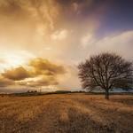 El árbol solitario thumbnail