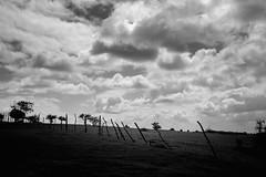 Chile | El cajon | Landscape (Medigore) Tags: mistery monocromático montañas white medigore chile blanco negro aire libre mist black campo canon bosque árbol hierba paisaje mountain