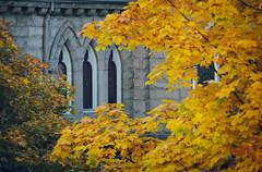 three windows (annapolis_rose) Tags: vancouver richardsstreet holyrosarycathedral catholicchurch churchwindows autumn autumncolors autumnleaves fallleaves