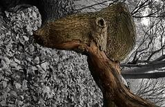 Woodland beast (katy1279) Tags: woodlandtreesfallentreesbeastscreaturesnaturalart rotatedreality