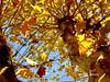 Árvore em Milagres. (ashera08) Tags: ashera portugal árvores leiria paisagens picasa photos picture paintings