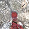 -11-11-15- (Le monde d'aujourd'hui) Tags: red toweroflondon poppies 2015 11 remembrance armiistice war peace london tower november castle art picsart swirl