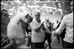 (Another Purrfect Pair) (Robbie McIntosh) Tags: leicamp leica mp rangefinder streetphotography 35mm film pellicola analog analogue negative leicam summilux analogico leicasummilux35mmf14i blackandwhite bw biancoenero bn monochrome argentique summilux35mmf14i autaut dyi selfdeveloped filmisnotdead strangers candid kodaktrix kodak trix ilfordilfoteclc29 ilfoteclc29 lc29 eyecontact f14 glow man cat catexhibition woman