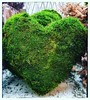🎼My heart will go on🎶#heart #hearts #hart #hartje #heartshaped #greenheart #lovephotography #photographer #photography #fotograaf #fotografie #inside #interior #design #interieur (Chantal vander Reijden) Tags: fotografie hart lovephotography photography heart inside greenheart interieur interior photographer hartje fotograaf heartshaped hearts design