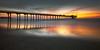 Bird on a Pier (David Colombo Photography) Tags: scrippspier sunset beach reflection vibrant pier lajolla california pacificocean ocean water outdoor landscape nikon d800 davidcolombo davidcolombophotography