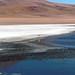 Laguna Blanca - Sud Lipez