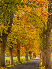 Autmn Landscape (achim-51) Tags: baum allee landstrase gras nrw germany kreissoest panasonic dmcg5 lumix herbst autmn landscape landschaft farbenspiel