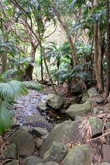 LHID 177 (newnumenor) Tags: australia lordhoweisland nsw
