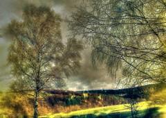 * Trasformazione * Transformation * (texture) * (argia world 1) Tags: collina hill foschia mist alberi trees paesaggio landscape foresta forest erba grass nuvole clouds cielo sky campo field temporale storm texture impressionismo impressionism