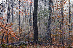 Chill (Matt Champlin) Tags: monday thanksgiving snow snowy chill cold ice icy freezing woods woodland peace peaceful nature landscape calm calming canon 2017 morning