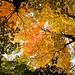 Forest+Sky+-+Ciel+de+for%C3%AAt