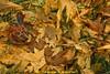 Autumn the joyful (C@MARADERIE) Tags: kpk gik giki aut autumn autumalscene rain