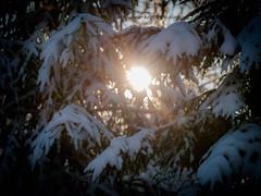 20171119003843 (koppomcolors) Tags: koppomcolors forest winter skog vinter snö snow