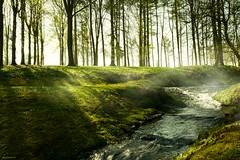 Fog - 4121 (YᗩSᗰIᘉᗴ HᗴᘉS +11 000 000 thx❀) Tags: fog mist brouillard mysterious mystérieux trees water eau river arbre nature annevoie jardinsdannevoie be bel eu belgium belgique europa europe yasminehens hensyasmine