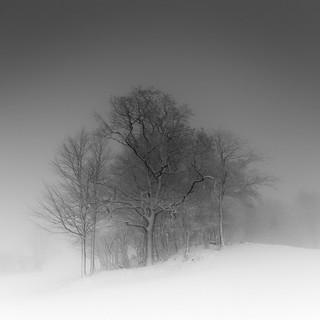 Treephony