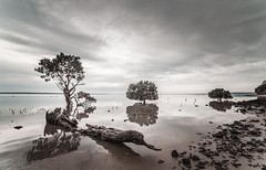 Tenby Point mangroves (laurie.g.w) Tags: tenbypointmangroves westernportbay westernport bay victoria water mangrove tree sky cloud coast shoreline waterscape