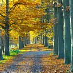 Autumn Avenue thumbnail