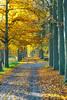 Autumn Avenue (enneafive) Tags: avenue trees light autum landscape leafs trail fujifilm xt2