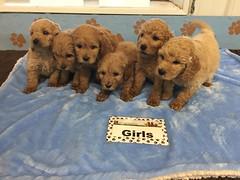 12-3 Roxie Girls_Pic 3