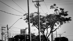 DSC07300 (O KDUKO) Tags: araraquara blackandwhite blackandwhitephotography pictureoftheday blackandwhitephoto photography bnwcaptures monochrome monochromatic instablackandwhite monoart instabw bw bwstylesgf artgallery visualart bwphotooftheday photoshoot bwstyleoftheday aesthetics streetphotography arts