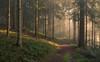A magical morning (Guido de Kleijn) Tags: forest blackforest guidodekleijn nikond500 nikon1224 schwarzwald schwarzenberg schwarzenbergimmurgtal baiersbronn badenwürttemberg light lightrays morninglight