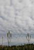 Museu de Arte da Pampulha (Johnny Photofucker) Tags: museudeartedapampulha belohorizonte bh lightroom brasil brazil brasile map pampulha céu sky cielo paisagismo burlemarx 24105mm jardim giardino garden nuvem nuvens nuvola nuvole cloud clouds planta plant pianta