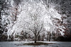 RVA Snow Day 12-9-2017 (adamwilliams4405) Tags: richmond rva richmondva visitrichmond virginia visitvirginia va loveva winter canon landscapes snow snowday nature tones outside explore