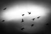 (a dream of) freedom (Neko! Neko! Neko!) Tags: blackandwhite blackwhite bw mono monochrome dreams birds sky emotion feeling freedom illusion memories past subconsciousness symbolic expression expressionism