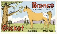 Runnin Bare #1117: Cricket & Bronco - Medley, Alberta (73sand88s by Cardboard America) Tags: vintage runninbare qsl cbradio cb qslcard horse circket alberta