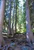 Jackson Hole 1707-1196.jpg (DevonshireMedia) Tags: wyoming jacksonhole travel 2017 grandtetons tetons