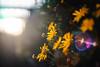 ILCE-7M2-04853-20171208-1616-HDR // Minolta MD 50mm 1:1.7 (Otattemita) Tags: 50mmf17 florafauna minolta minoltamdmdiii50mmf17 fauna flora flower nature plant wildlife minoltamd50mm117 sony sonyilce7m2 ilce7m2 50mm cnaturalbnatural ota