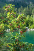 Acer (heldreichii) trautvetteri, First Baduk lake (hikuta) Tags: mountains reserve baduk teberda first russia caucasus acer trautvetteri maple heldreichii