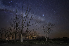 Next to the way (karinavera) Tags: longexposure night photography urban ilcea7m2 solitary dead epecuen starry buenosaires sky road trees stars milkyway