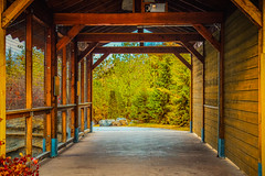 Have to go through it (A Great Capture) Tags: wooden structure nature wood through tunnel toronto zoo autumn fall passageway agreatcapture agc wwwagreatcapturecom adjm ash2276 ashleylduffus ald mobilejay jamesmitchell on ontario canada canadian photographer northamerica torontoexplore automne herbst 2017