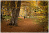 La strada nel bosco . The road in the wood. (antoninao) Tags: boscosantantonio2017 bosco autunno alberi via pescocostanzo canon 5dmarkiii abruzzo laquila antonina orlando ngc street trees autumn wood santantonio 2017 forest tree park