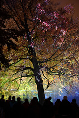 _ROOT Glow Eindhoven 2017 (Elios.k) Tags: vertical outdoors people many group visitors tourists spectators standing night tree illuminated artinstallation lightartwork projectionlaser branches silhouette root nachtegaallaan gijsvanbon travel travelling november 2017 glowfestival lightfestival light lightart exhibition gloweindhoven2017 gloweindhoven glow2017 canon 5dmkii photography eindhoven noordbrabant northbrabant netherlands nederland europe