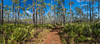 Morningside Trail (hetrickwesley) Tags: purple canon 80d florida gainesville morningside morningsidenaturecenter trail panorama nature outdoors landscape