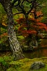 Kyoto colours (rrfaris1957) Tags: littlestories picswithsoul kyoto garden autumn
