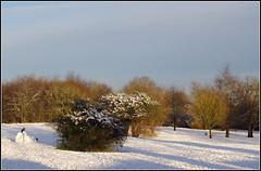 Daneholme Park (Lotsapix) Tags: northamptonshire daventry weather snow